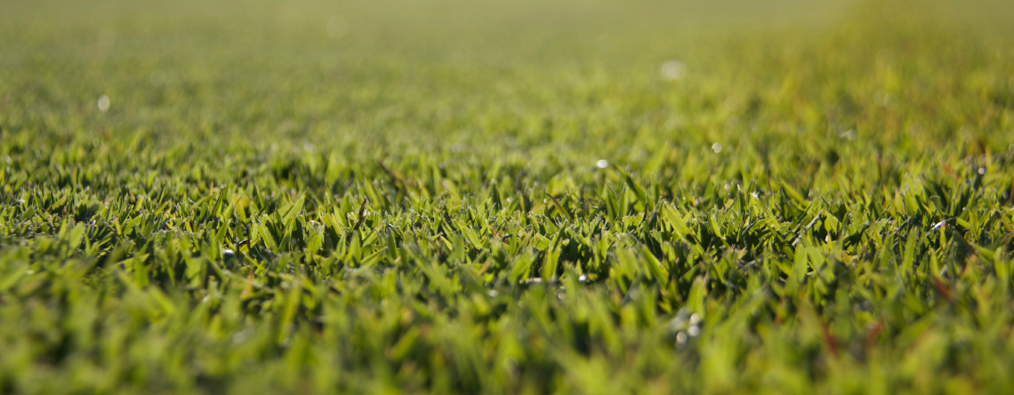 empire zoysia, turf sunshine coast, sunshine coast turf suppliers, empire zoysia sunshine coast, platinum zoysia