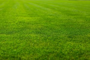 Caring for your new lawn in three easy steps