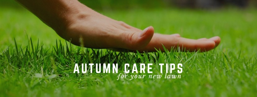 Autumn care tips for your new lawn