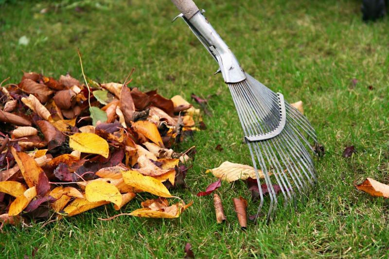 turf care, sunshine coast, sunshine coast turf, autumn lawn care