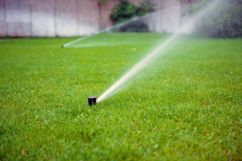 how to choose the right turf for your place, consider how much water is available