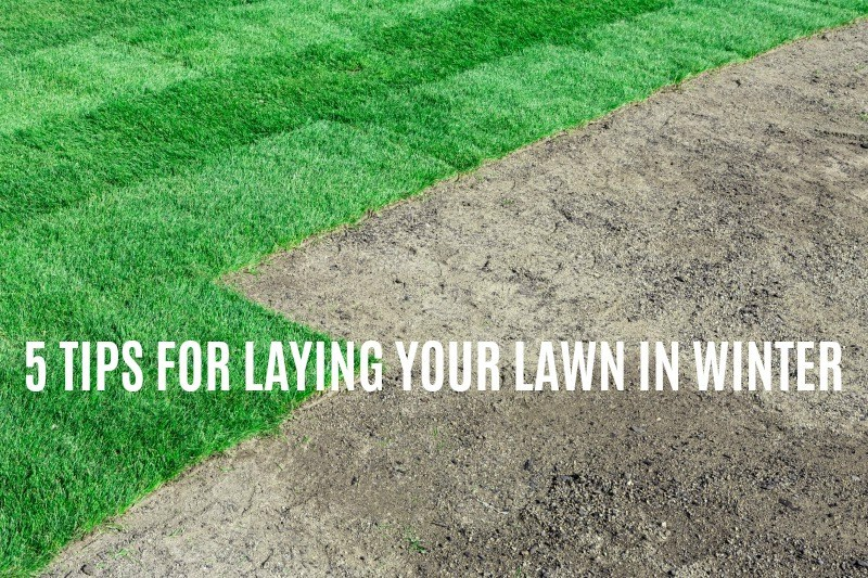 5 tips for laying your lawn in winter