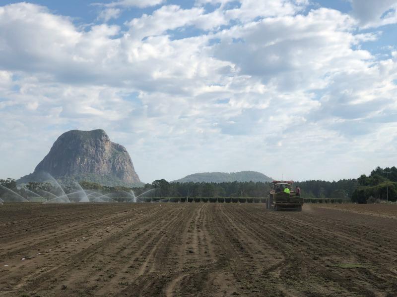 turf sunshine coast, turf farm, glass house mountains, turf machinery, planting