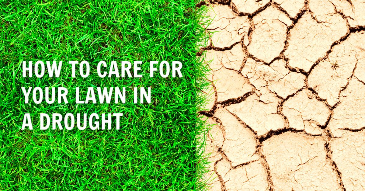 How to care for your lawn in a drought
