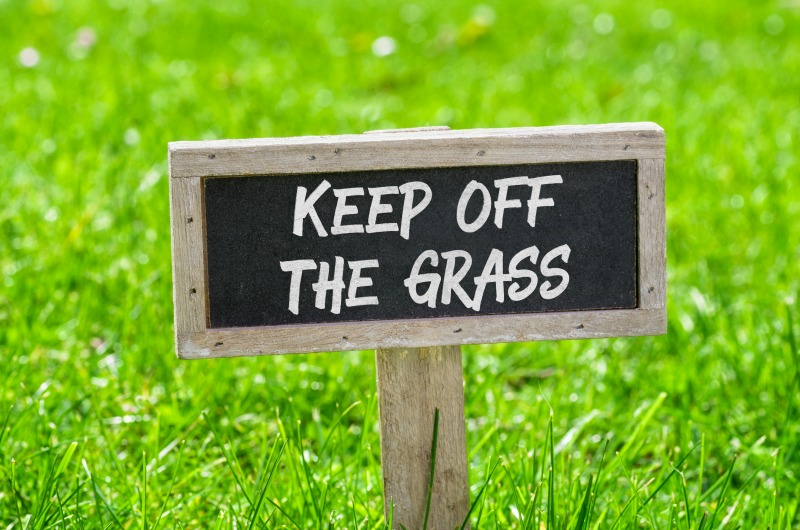 how to care for your turf during the drought, drought proof lawn