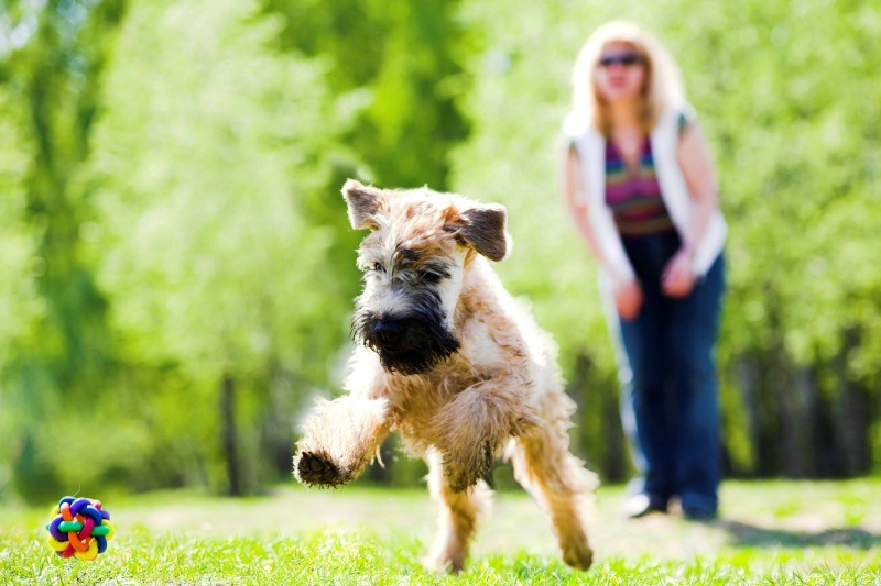 Lawn Care Tips for Dog Owners