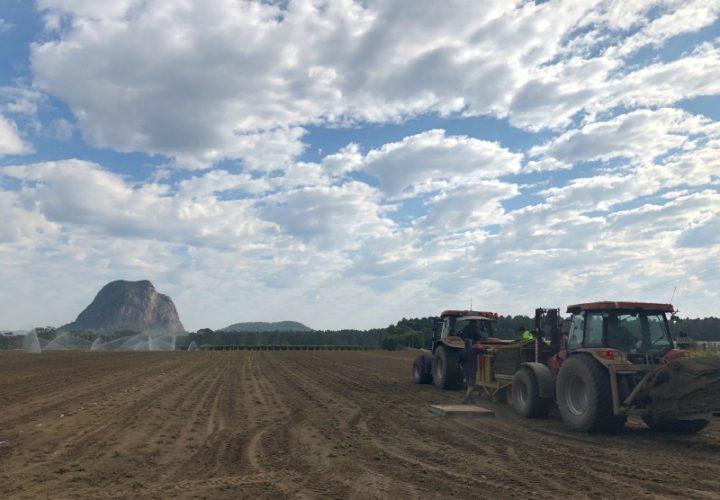 Behind The Scenes: Planting Turf