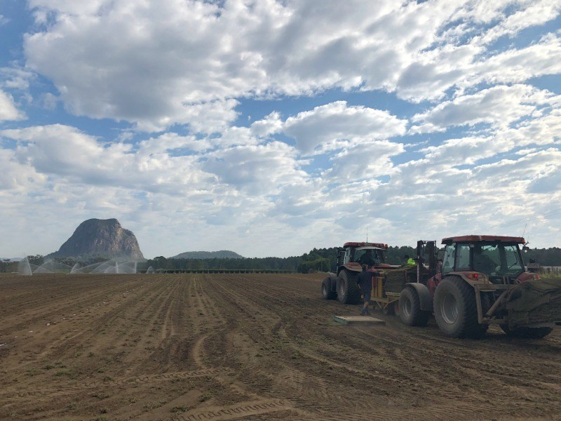 Read more about the article Behind The Scenes: Planting Turf