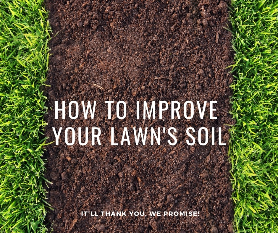 how to improve your lawn's soil