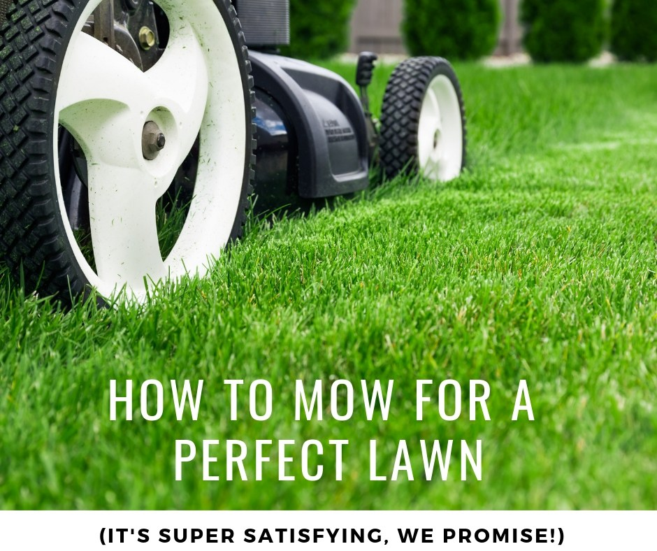 how to mow for a perfect lawn