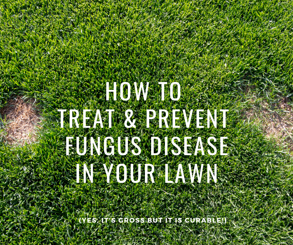How To Treat And Prevent Fungus Disease In Your Lawn Wild Horse Turf