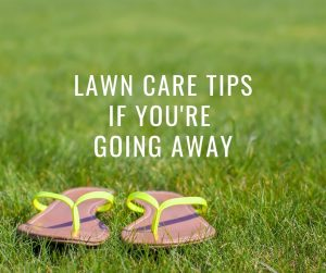 Lawn care tips if you're going away